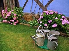 Uttenhoffen - La Ferme Bleue. Les arrosoirs. (Gilles Daligand) Tags: uttenhoffen alsace fermebleue fleurs hortensias arrosoirs mur bleu colombages