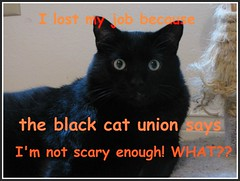 Boo contemplates calling a lawyer (nodouble - mostly away) Tags: blackcat boo boobear booly halloween2014 cantbepushedaround notveryscaryjustreallybig