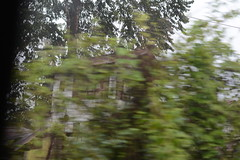 Hidden (FuadAs) Tags: building 50mm nikon focus hidden bushes obscurity abandones
