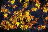 Platanus 12 (Polis Poliviou) Tags: old autumn winter man tree fall nature leaves forest leaf europe grandfather cyprus grandpa planes wise environment platanus aged cipro grandpapa sycamores larnaca polis planetree zypern kypros chypre chipre kypr cypr cypern קפריסין kipras ciprus republicofcyprus κύπροσ кипър キプロス odou poliviou polispoliviou πολυσ πολυβιου cyprusinyourheart кіпр кипар ไซปรัส sayprus chipir wwwpolispolivioucom yearroundisland cyprustheallyearroundisland ©polispoliviou2015