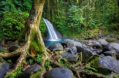 Cascade aux Ecrevisses (-CyRiL-) Tags: france waterfall eau long exposure cascades guadeloupe basseterre petitbourg cyrilbkl departementsdoutremer cyrilnovello