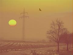 schnee von gestern (hlh 1960) Tags: schnee trees winter sun snow bird sol nature sunrise germany landscape soleil natur compo powerlines yesterday landschaft sonne strommast