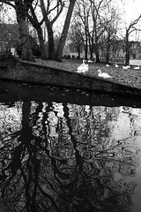 Trees reflected (LesleyPhillips Images) Tags: blackandwhite blancoynegro water reflections belgium brugge swans