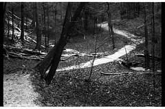 November Snow (solarnu) Tags: statepark park bw usa ny film iso400 hc110 scan kodaktrix ithaca fm2 tremanstatepark treman earlysnow roberthtreman dilb nystatepark 68f7mins