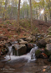 Val d'Aveto (Tonci.M ) Tags: liguria val genova autunno lanscape bosco daveto