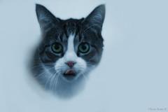 (Olivb77) Tags: blackandwhite cats pets animals blackwhite chats noiretblanc animaux