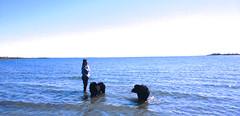 me and my girls (Chum's mum) Tags: newfoundland blackdog leia newf chumley chummy terranova newfie flopsy newfy chumy mooncusser nereides misschumley chumsy