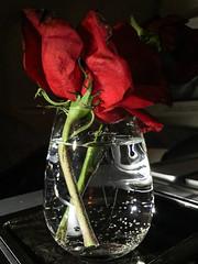 Its yours (Mohmed Althani) Tags: travel light flower green love water night lights friend waterdrop exposure day gulf drop missyou doha qatar greatshots iphone5 flowerwatcher flickrportal