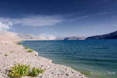 Admiring the beauty of Pangong. (_Amritash_) Tags: blue india himalayas ladakh pangong pangongtso incredibleindia incredibleladakh incrediblemountains incrediblehimalayas landscapeinladakh highaltitudehimalayanlake roadtripinhimalayas exploringinfinity