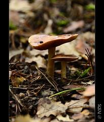 Detalls petits.... (PCB75) Tags: mushroom mira foret seta champignon pilz setas bosc magia  bolets bolet schwammerl  onddo mgic  goita