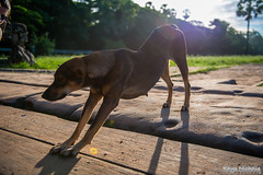 Siem_Reap_Jul_2014_037.jpg (Rhys Nicholls Photography) Tags: travel dog animals cambodia angkorwat siemreap seimreap krongsiemreap