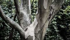 _DSC3674 (agustin sollberg) Tags: plants naturaleza nature madera nikon plantas arboles campo hongos 2014 d3100