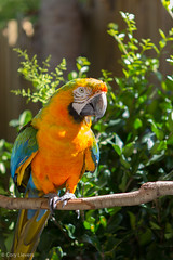 """Parrot • <a style=""""font-size:0.8em;"""" href=""""http://www.flickr.com/photos/92159645@N05/16049154607/"""" target=""""_blank"""">View on Flickr</a>"""