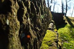 Stone Wall (ryan777s) Tags: ohio sun green stone wall sunrise moss glare stonewall sunglare nikond3200
