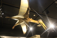 Pterosaur (Ryan Somma) Tags: museum national geographic pterosaur