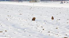 Sneeuw 28-12-2014 (Walter van Ooijen) Tags: winter snow holland nature netherlands dutch landscape licht december day sony sneeuw nederland natuur sigma dag landschap kou daglicht a65 flickrsbest sigma18250mm