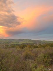 P1420557 (moondoggie71) Tags: california pink orange colors clouds dawn january sage scrub saddleback irvine baldy chaparral mtbaldy turtlerock 2015 sangarbrielmountains santaanamountains shadycanyon coastalsage