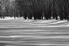 Nashwaaksis Stream (Boganeer) Tags: trees winter blackandwhite snow canada ice lines canon frozen pattern shadows hiver fredericton newbrunswick maritime nouveaubrunswick maritimes atlanticcanada nashwaaksis canonxti nashwaaksisstream