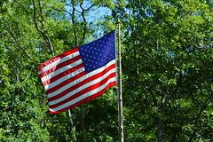 American Flag (thomas.hartmann496) Tags: blue trees red white photo flag american flagpole