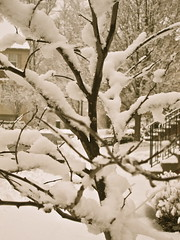 Grandma's Winter (Anna Sikorskiy) Tags: trees winter bw stilllife snow nature canon landscape town cozy day mood artistic atmosphere abstraction canonpowershots90