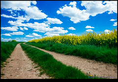 160427-7759-XM1.jpg (hopeless128) Tags: sky france clouds fields eurotrip fr rapeseed 2016 chassiecq aquitainelimousinpoitoucharentes aquitainelimousinpoitoucharen