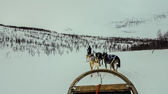 Dog sledding in Lapland (Echoes89) Tags: dog norway norge lappland sledding nordnorge tromso troms lyngen lyngenfjord