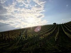 Abendspaziergang (olipennell) Tags: germany landscape vineyard landschaft weinberg iphone badenwrttemberg neckarsulm