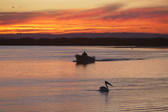 Moody Evening (The Pocket Rocket) Tags: sunset boat australia victoria oceangrove australianpelican barwonriver pelacanusconspicillatus