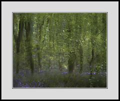 Spring impression III (Gibbom) Tags: morning trees light sun painterly me nature bluebells forest woodland spring movement natural hampshire impression beech