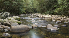 Gloucester River (Eduardo_il_Magnifico) Tags: trees water creek forest river flow bush rocks australia gloucester nsw newsouthwales worldheritage barringtontops barrington barringtontopsnationalpark sigma35mmf14 nikond750 gloucestercreek