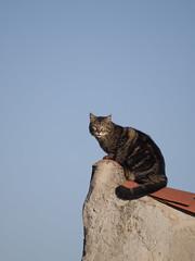 Chat perché *----+ (Titole) Tags: cat chat gato gatto katze kat titole nicolefaton rooftop sky friendlychallenges 15challengeswinner