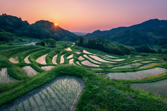 Terraced Rice Field Sunrise (lestaylorphoto) Tags: travel food japan asian nikon asia rice natural paddy grow chiba leslie taylor crops organic oriental ricefield ricepaddy paddies terraced d610 1635mm    lestaylorphoto