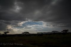 Stormy Serengeti Skies (Nigel Nudds Photography) Tags: elephant rain tanzania shower monkey rainbow buffalo lion butterflies pelican leopard zebra crocodile antelope cheetah giraffe baboon serengeti hyrax vervet hippos dikdik agama topis