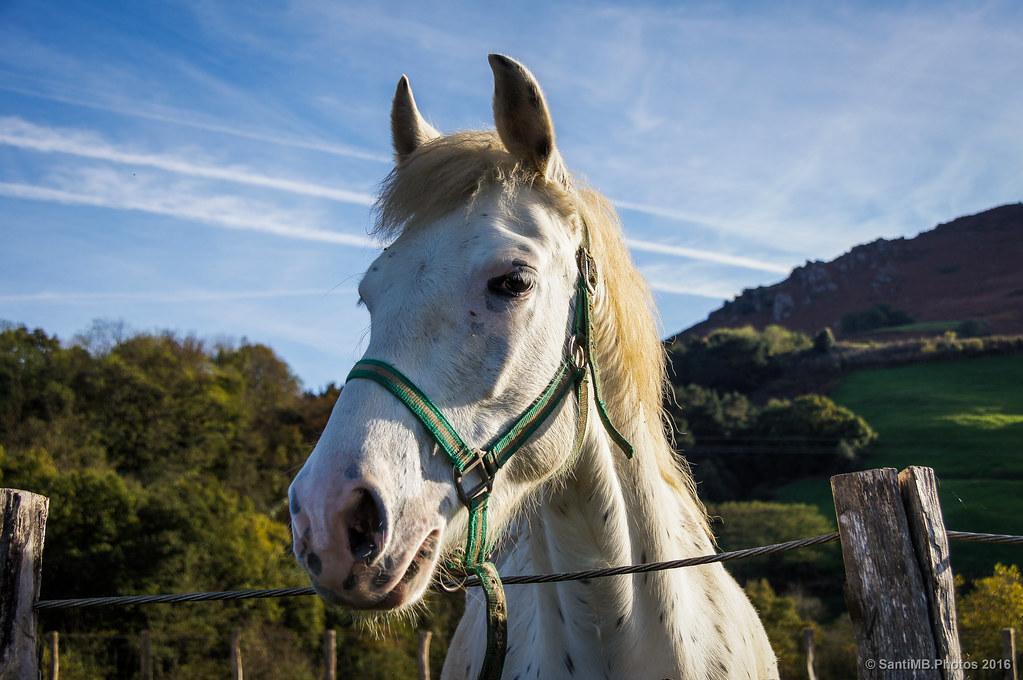 El caballo simpático