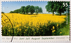 great stamp Germany 55c summertime, field of rape (Sommer, Rapsfeld, t, el verano, estate, , , vero, lato, zomer, sommar, ) timbres Allemagne sellos Alemanha selos Alemania francobolli Germany postzegel       (stampolina) Tags: summer plant nature field june yellow juni jaune postes germany landscape deutschland estate mail stamps sommer jahreszeit natur pflanze july august rape september amarillo gelb giallo porto zomer alemania vero summertime juli  t timbre tyskland allemagne postage postzegel franco alemanha duitsland sommar sellos rapsfeld elverano briefmarken markas lato pulu  selos  timbres almanya njemaka francobolli postzegels  znaczki markica  frimerker pullar timbru   pullari  antspaudai znamk