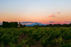 Ruine, vigne et Mont Ventoux (benji.valettoises) Tags: de soleil coucher ruine mont vigne ventoux