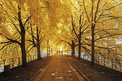 Running & Walking (PLF Photographie) Tags: infrarouge infrared tree walking running ile cygnes paris yellow gold jaune