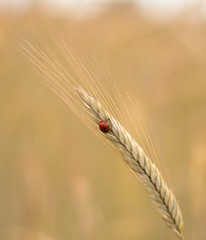 ladybug (-j0n4s-) Tags: color art nature canon bug insect 50mm flickr dof bokeh insects ladybug f18 50mm18 j0n4s