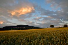 En ce dbut d't, le soir (Excalibur67) Tags: sunset sky cloud nature landscape nikon sigma ciel d750 nuages paysage coucherdesoleil 24105f4dgoshsma