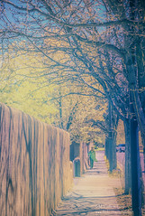 Santa Fe Stroll (inlightful) Tags: trees streets newmexico santafe southwest walking ir person human infrared nir strolling falsecolor nearinfrared