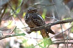 IMG_0194 (wfl_photog79) Tags: honeymoonisland florida dunedin pinellascounty