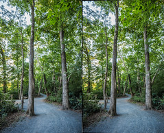 3D Path through the trees at Garrard Landing Park - 2016-07-15_04p (Paul and Nalva) Tags: stereography 3dphotography garrardlandingpark rokinon12mm rokinon12mmf2 rokinon12mmlens