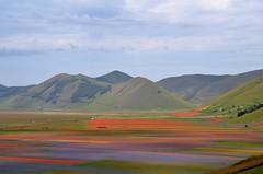 CASTELLUCCIO - La Tavolozza del Pian Grande (francesco_43) Tags: fiori colori umbria castelluccio castellucciodinorcia lafioritura