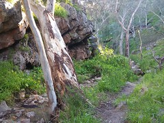 20160716_144943 (StephenMitchell) Tags: adelaidegreenhills nature organic trees gully valley hill mountain blackwood belair edenhills southaustralia trek walk creek rock stone