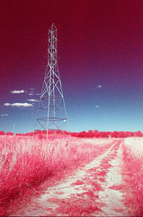Chippewa Wetlands EIR (scott_z28) Tags: minolta srt101 md rokkor 28mm f28 kodak aerochrome 1443 eir ektachrome infrared color e6 slide transparency film orange021 fpp thedarkroom michigan mi tricities chippewanaturecenter wetlands nature electricity electrical tower surreal landscape
