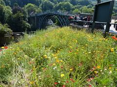 Bridge with Wildflowers (Thomas Kelly 48) Tags: panasonic lumix fz150 ironbridge shropshire riversevern wildflowers bridge