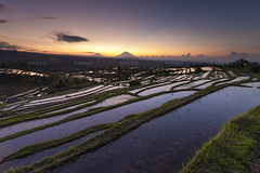 Reflection of Dawn - Bali Photography Tour (Pandu Adnyana Photography Tour) Tags: baliphotographytour baliphotographyguide balitravelphotography balilandscapephotography balilandscapetour bali jatiluwih ricefield sunrise reflections landscape
