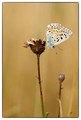 Butterfly (The Ramandolo Man) Tags: fuji fujifilm s5pro nature butterfly natura macro summer nikon nikkor105mmf28gvrmicro