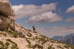 Alpine ibex (carlo.goweather) Tags: ibex stambecco eos100d canon canon100d alpigiulie udine friuli montagne