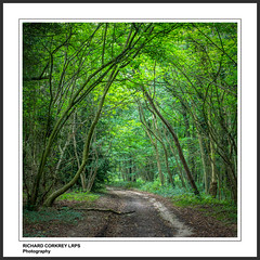 Eartham Wood (Chalky666) Tags: tree trees wood woodland forest westsussex southdowns footpath painterly art rockpaper